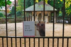 Newborn signs around zoo-Gansu is a yack at Jardin des Plantes zoo (menagerie)