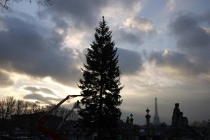 Tallest Christmas tree in Europe from Moselle, Place de la Concorde, Paris