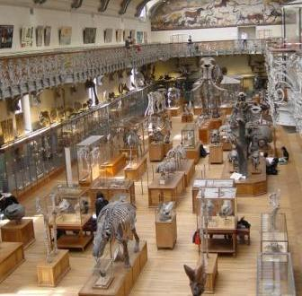 Museum of Natural History Mastodons Paris Gallery with skeletons Musee d'Histoire Natural Paris