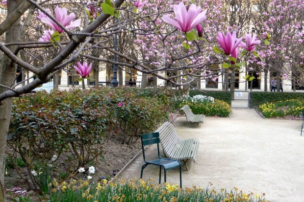 Luxembourg chair in Palais Royal 02