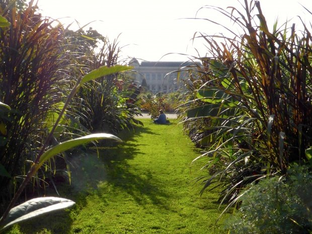 jardinsplantes03 colleensparis