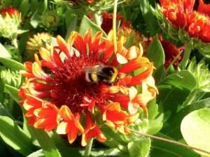 jardinsplantesredbee01 colleensparis