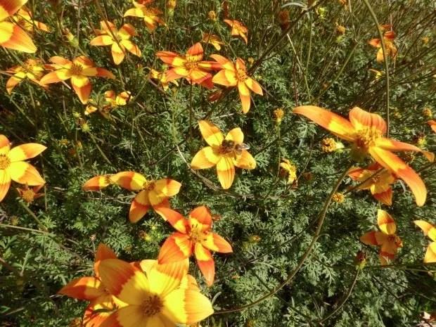 jardinsplantesyellowbee02 colleensparis