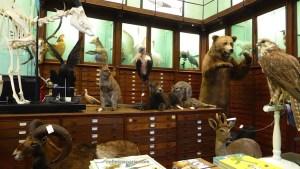 Deyrolle Curiosity Shop photo of collections, Paris