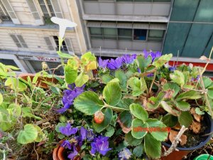 Image of our flowers and strawberries watered thanks to Lulu Dans Ma Rue