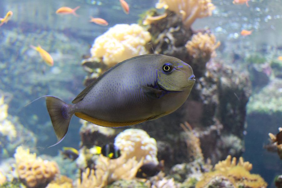 Visite de l'aquarium à Lausanne