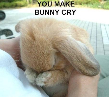Original Bunny Cry