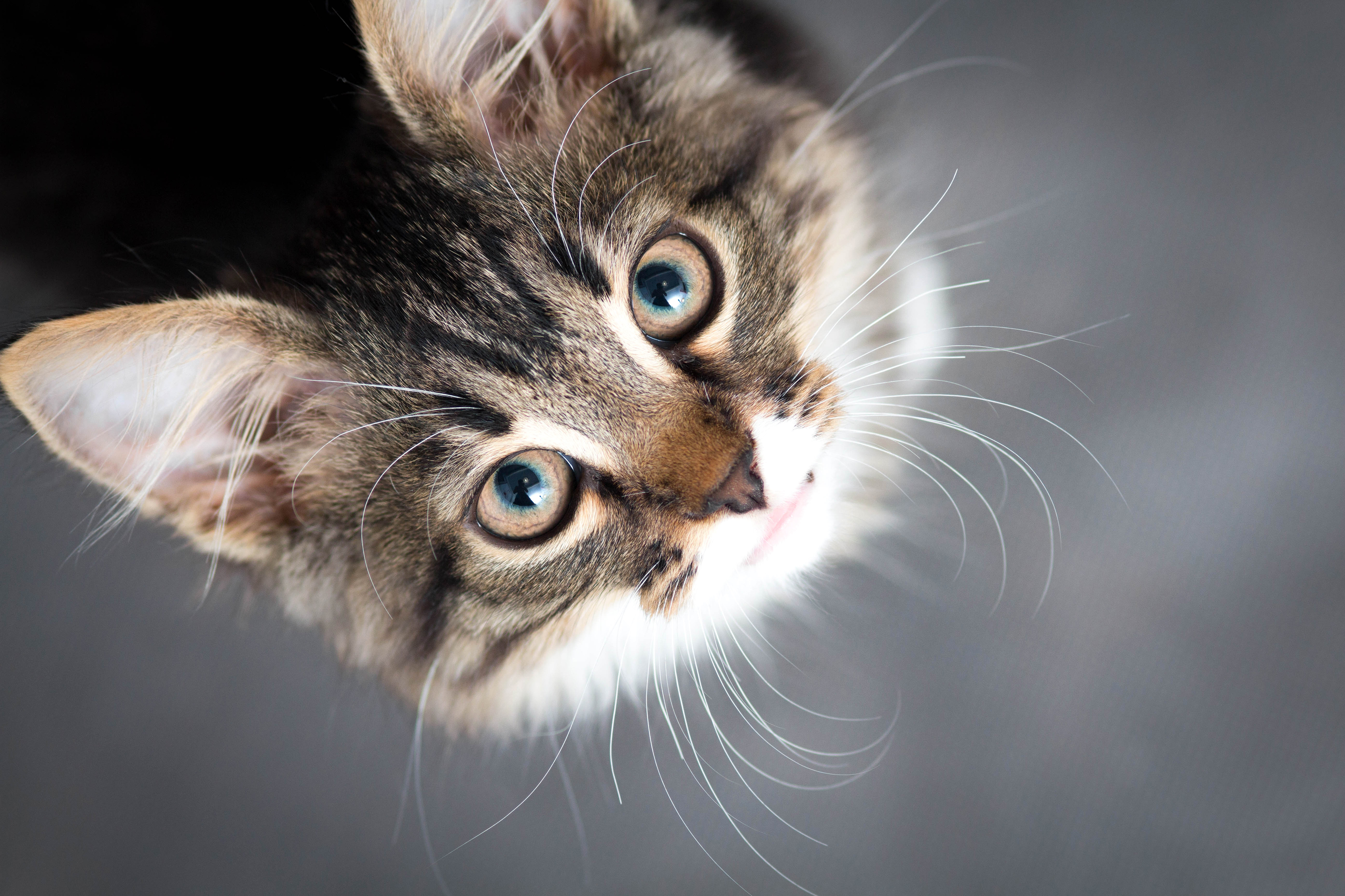 What To Tell Your Cat Sitter Before Going On Vacation College Manor Veterinary Hospital