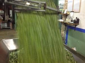 Lavorazione olive