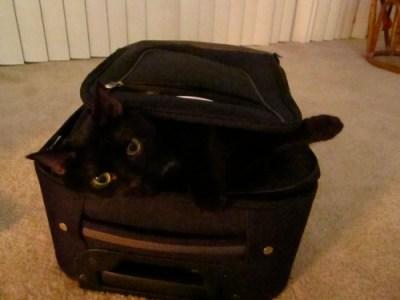 zoe-suitcase3