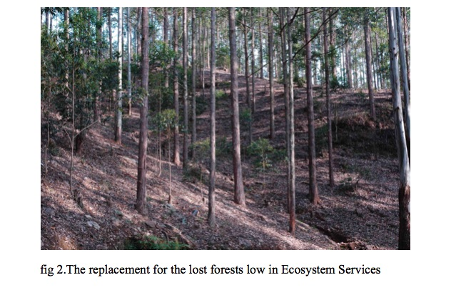 replacement-for-the-lost-forests-low-in-ecosystem-services
