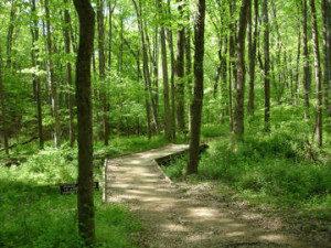 Little-Bennet-Regional-Park-MD