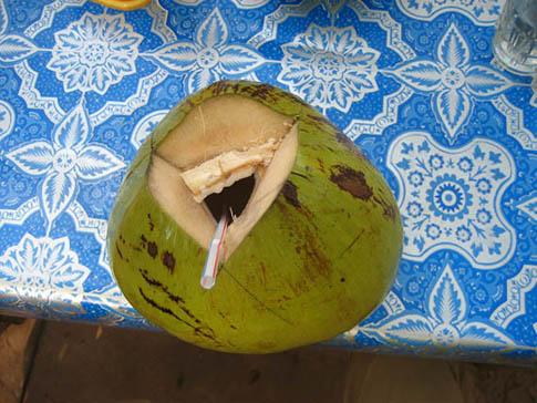 Noix de coco - Coconuts