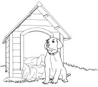 Animali - Cane davanti alla cuccia