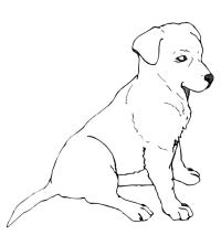 Animali - Labrador
