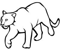 Animali - Pantera