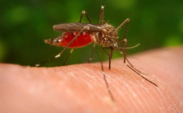 A fly biting the skin of a human being