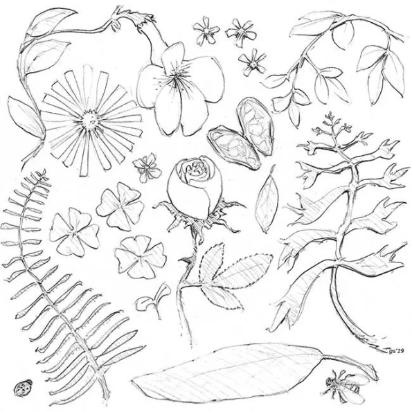 drawings of many kinds of vegetables