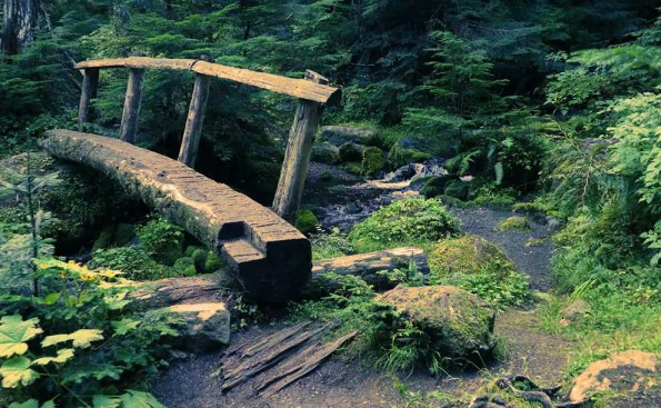 A log serves as a bridge with lots of wilderness around it
