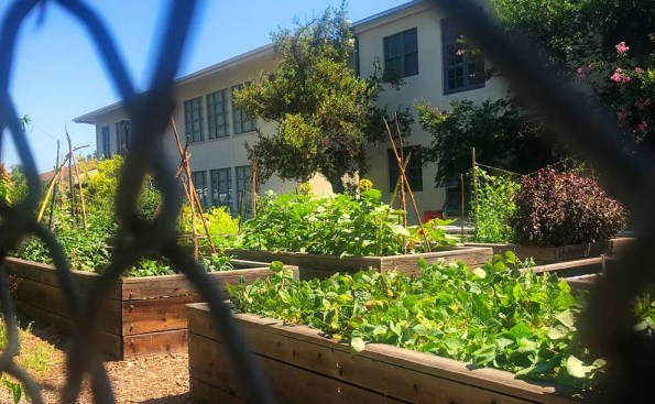 A garden with raised beds viewed via a fence