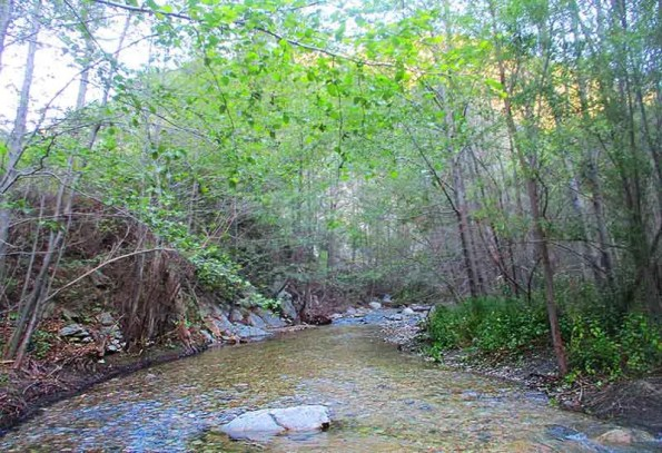 A stream and green trees around it