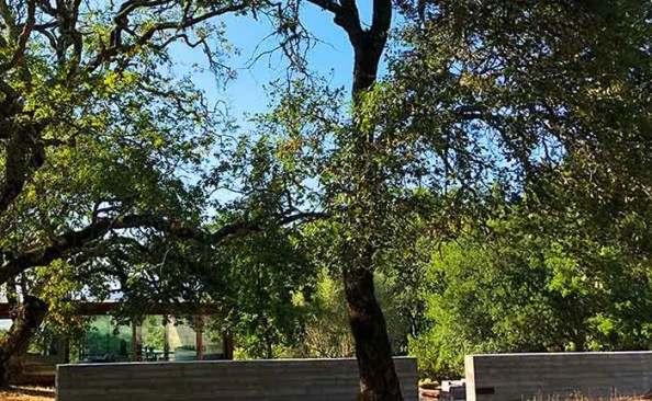 oak trees with fence in front
