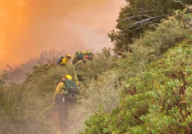 firefighters clearing brush near fire