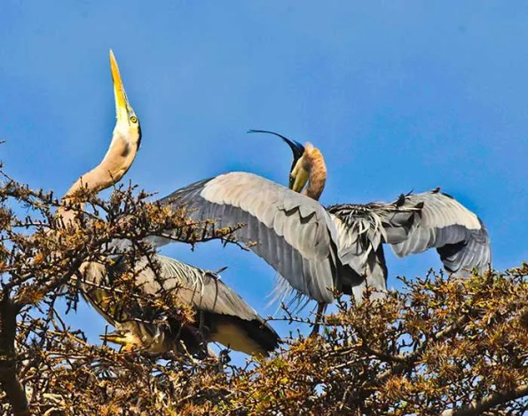 three birds on a nest