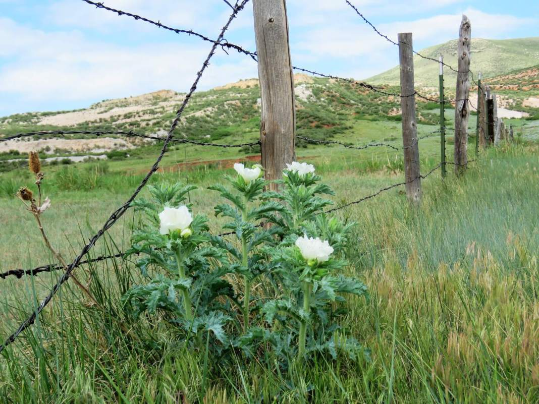 Volunteers partnered with Larimer County Natural Resources Department to help open up a wildlife corridor in Red Mountain Open Space. (Photo by Colorado State Forest Service via Flickr: Creative Commons)
