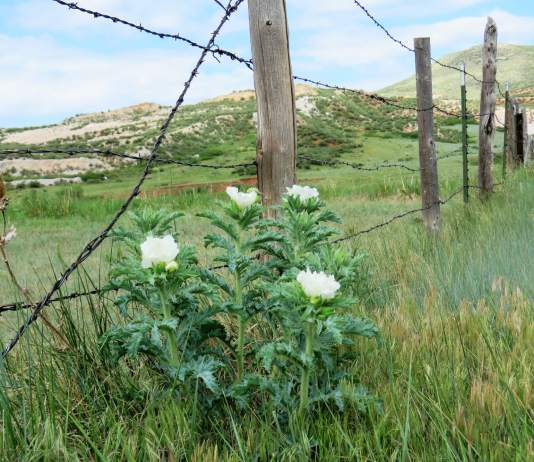 Guest Post:  Colorado should build a wall – of nature