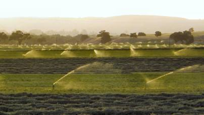 Irrigation in California