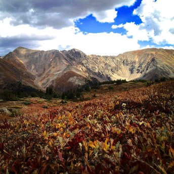 Just a five-minute walk away from Loveland Pass, the reddening alpine vegetation creates a tundra tapestry.