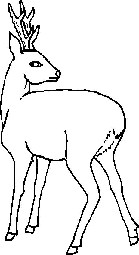 Animali Foresta 19, Disegni per bambini da colorare
