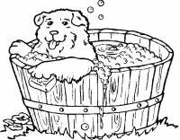 Cani 5, Disegni per bambini da colorare