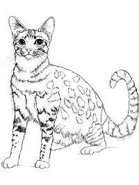Disegni Gatti Da Colorare Per Bambini Disegno Gatto Per