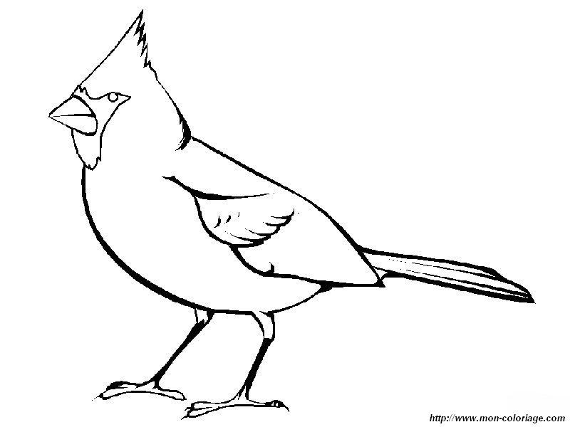 Colorear Aves, dibujo cardenal