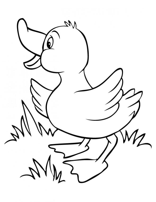 Coloriage Caneton cherche sa mère dessin gratuit à imprimer