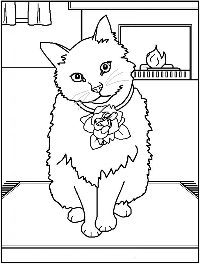 Coloriage Un Chat adorable dessin gratuit à imprimer