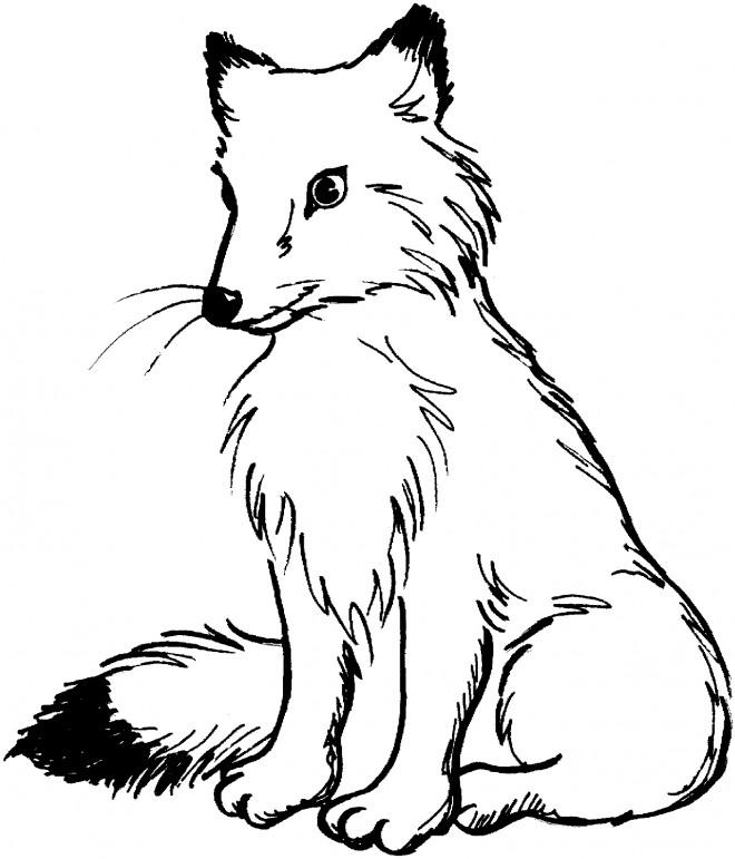 Coloriage Renard Roux dessin gratuit  imprimer