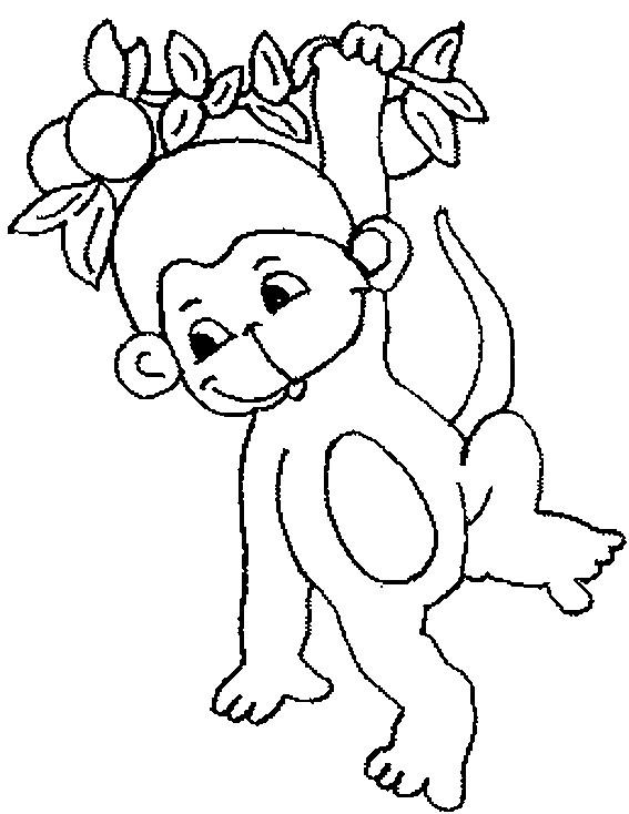 Coloriage Petit singe dessin gratuit à imprimer
