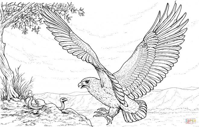 Coloriage Aigle et le serpent dessin gratuit à imprimer