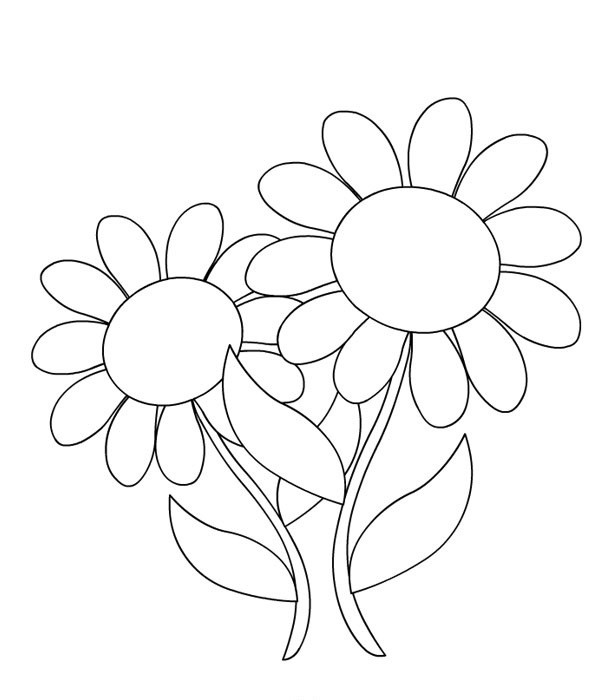 La Nature En Coloriage Marguerite