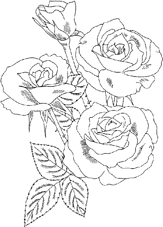 Coloriage Roses sur ordinateur dessin gratuit  imprimer