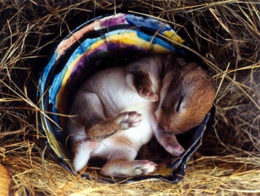 Les fonds dcran de lapins