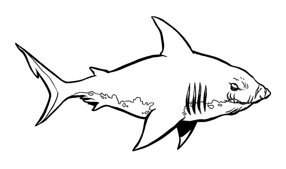 dessin à imprimer: Dessin De Requin A Colorier Et A Imprimer