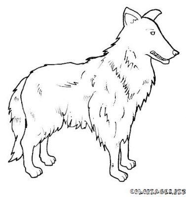 coloriage dessin chien lassie dessincoloriage