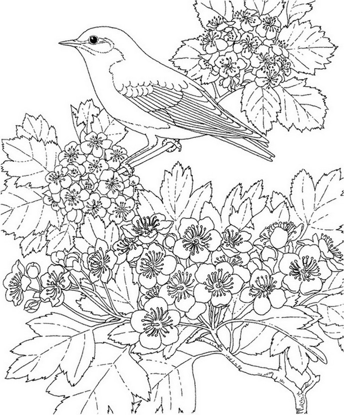 Desenho para colorir anti stress Mola 7