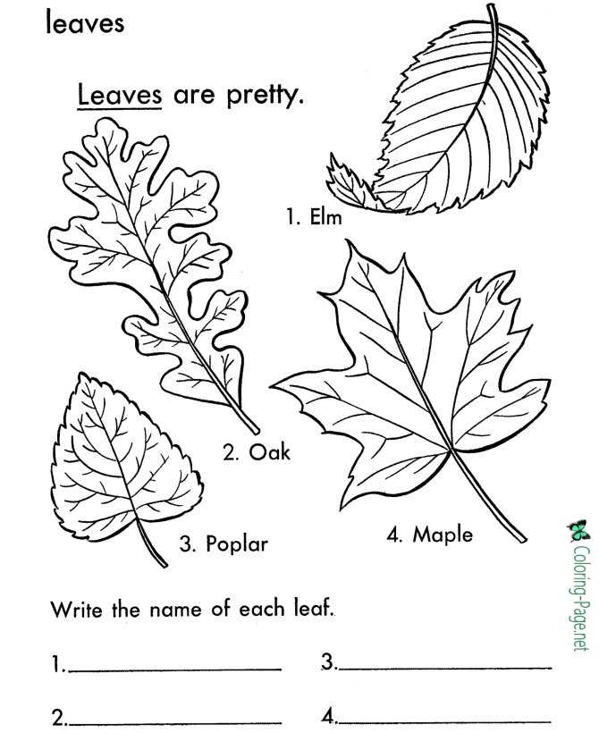 Tree Leaves Coloring Pages Leaf Names