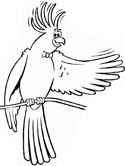 Cockatiel Coloring Pages