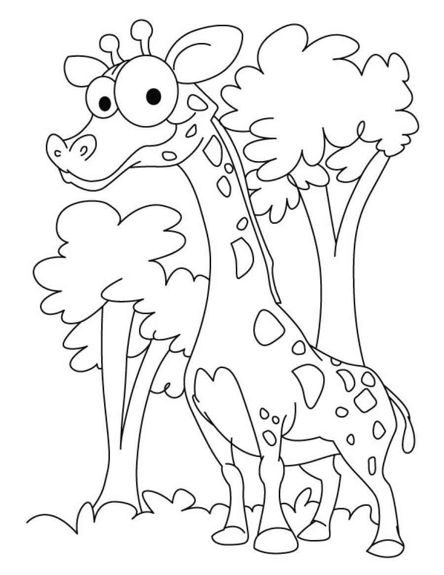 Desenho De Girafa Para Imprimir